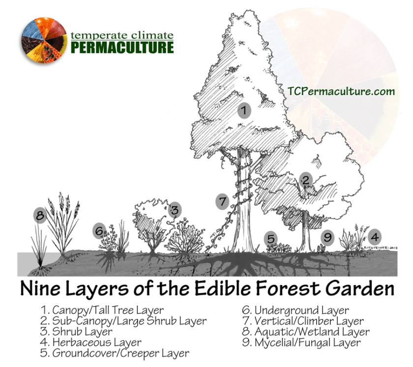 Nine Layers of the Food Forest Guilds