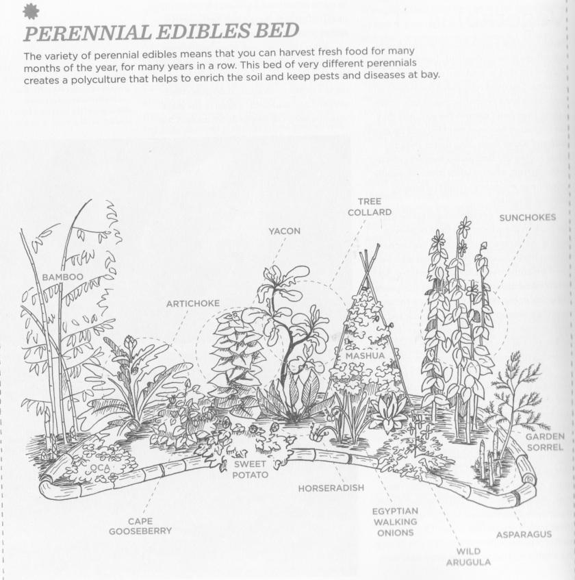 Perennial Edibles Bed