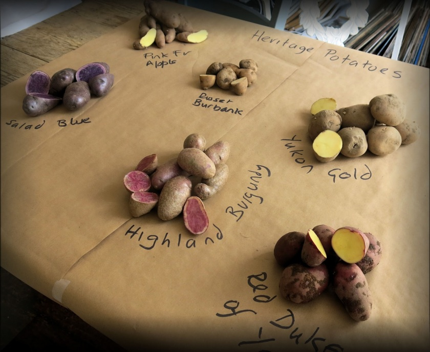 Heritage Seed Potatoes
