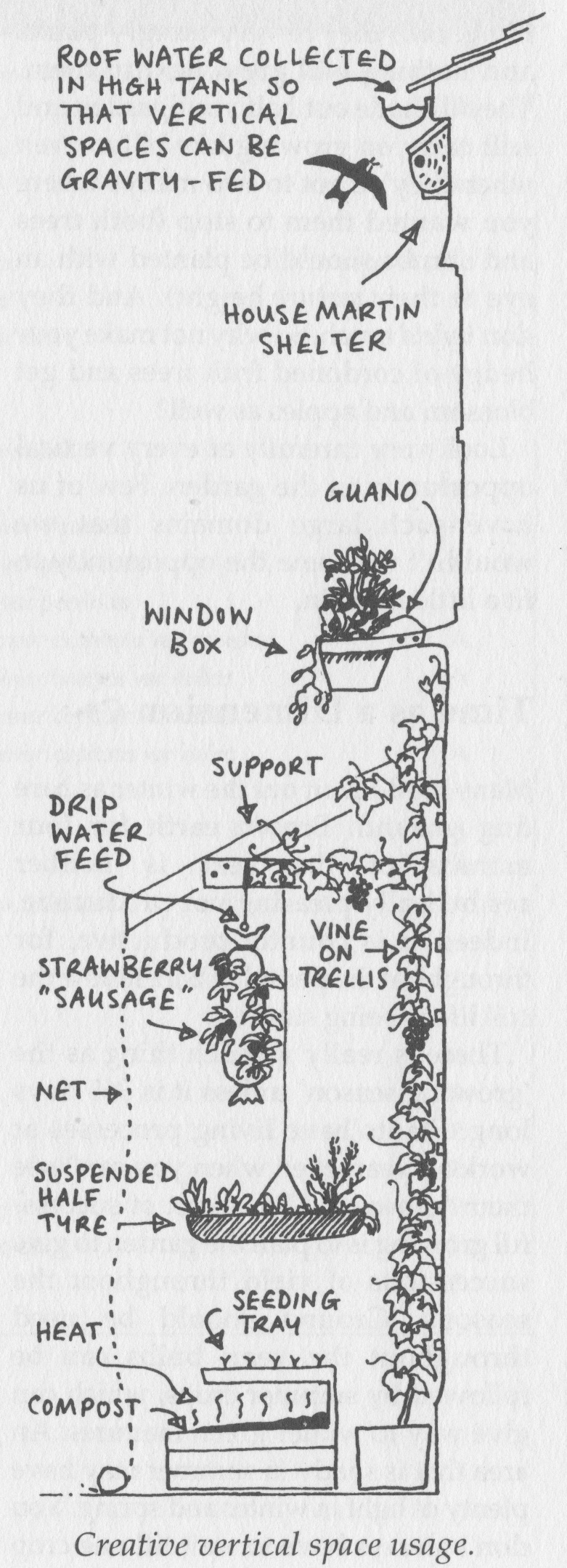 Vertical Space Use - Permaculture Style