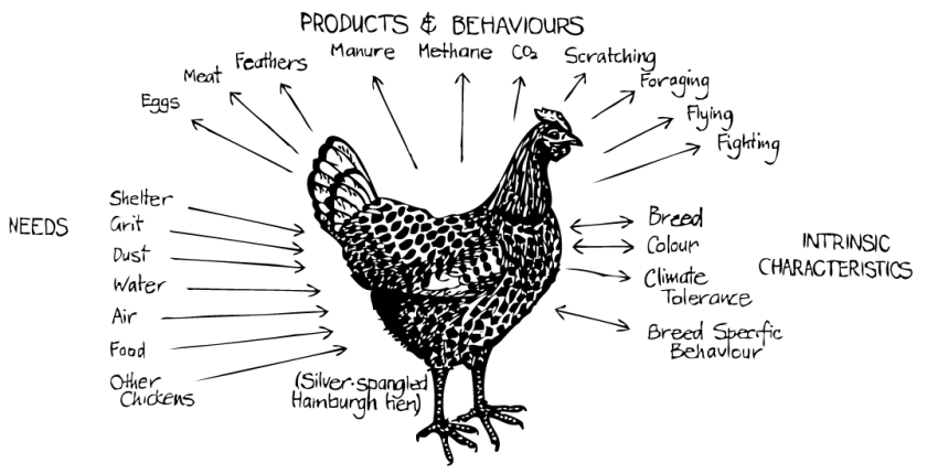 Permaculture View of a Chicken