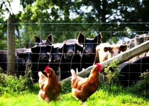 pigs & Hens 2_1