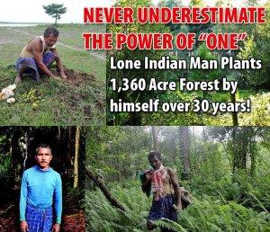 plantedforest