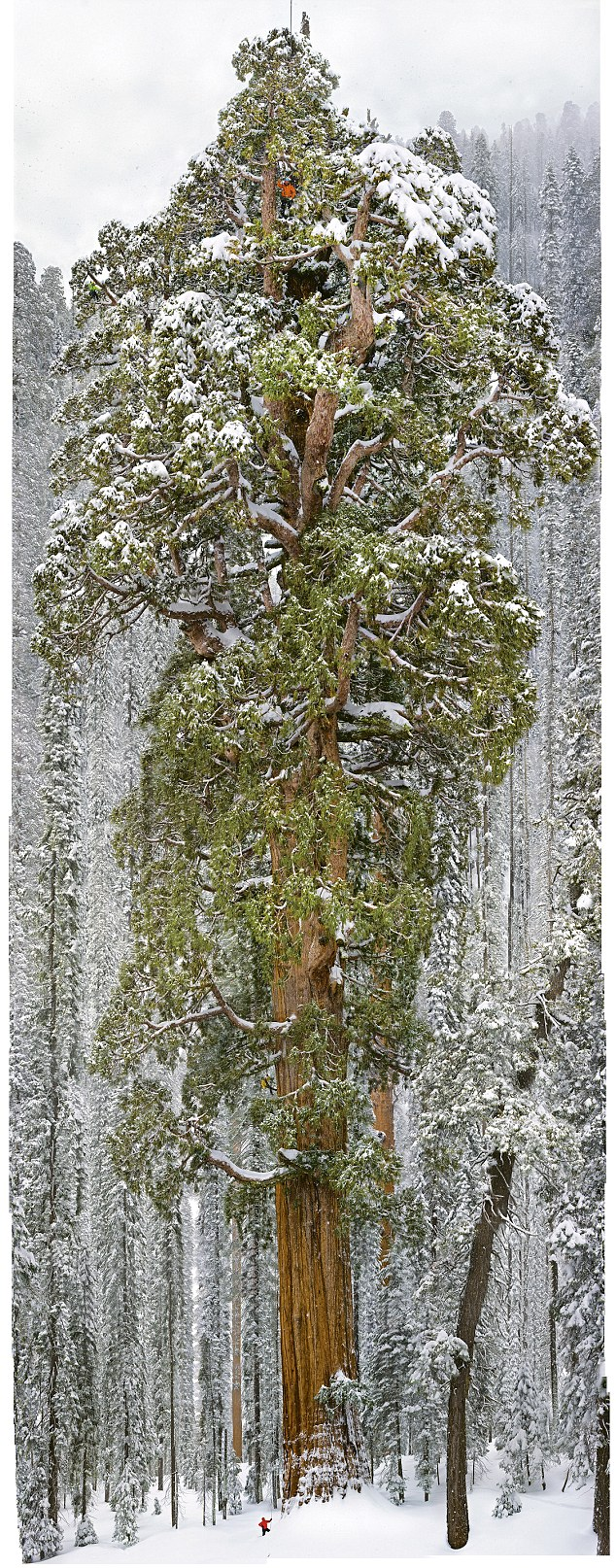 The Biggest Tree On The Planet