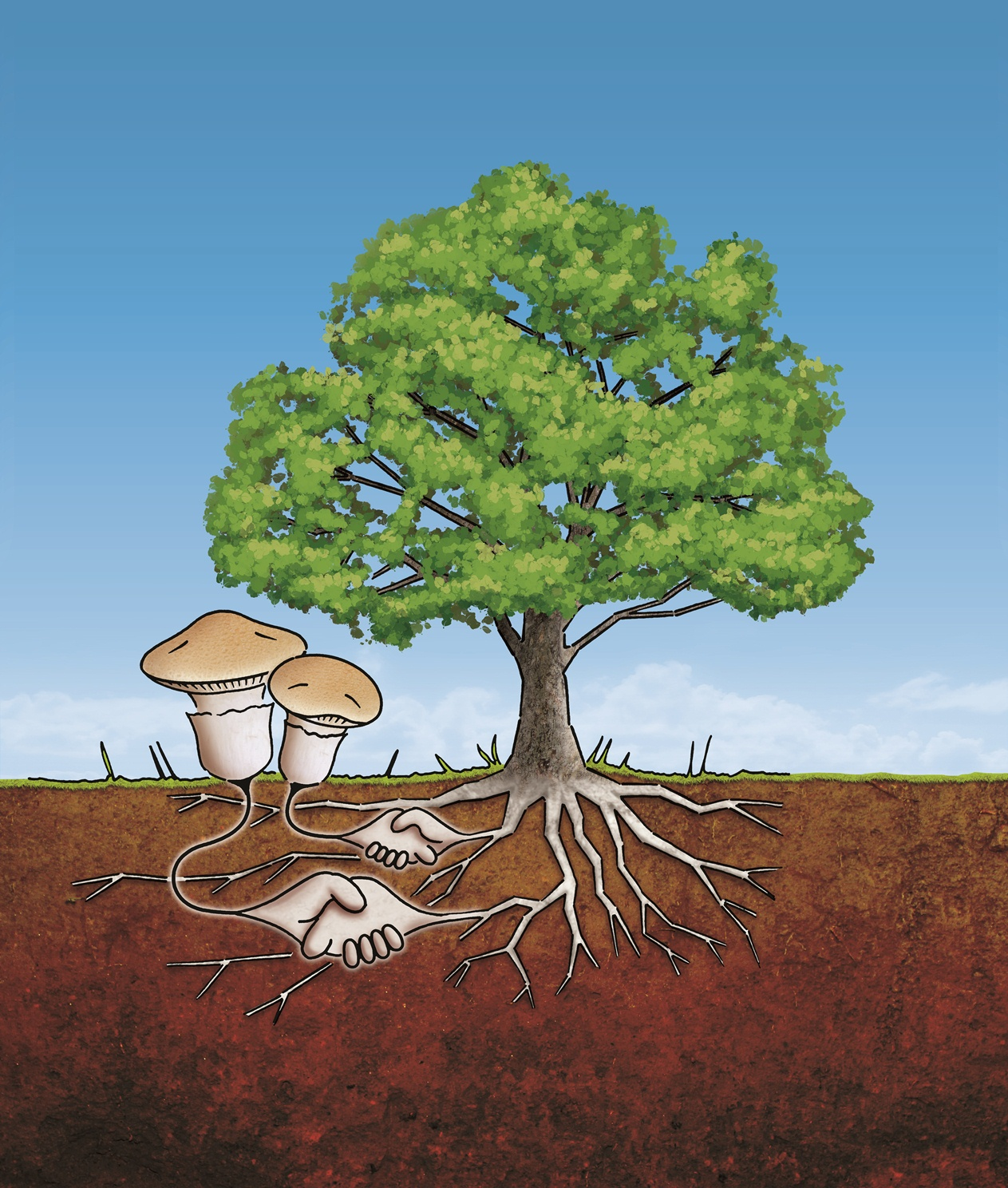 symbiotic relationship fungi and plants