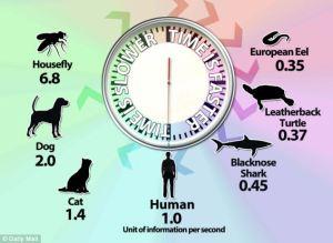 Timeperception