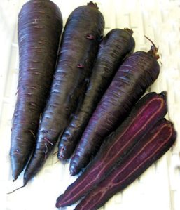 PurpleSuns