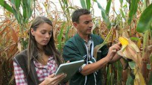 farmers_cornfield