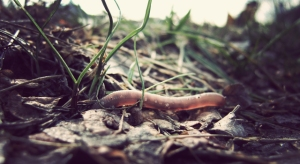 earthworm_running
